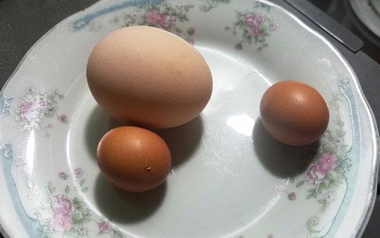 Hai quả trứng do con gà trống nhà bà V.T.N đẻ vào dịp gần Tết.