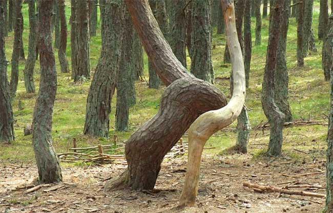 Khu rừng nhảy múa