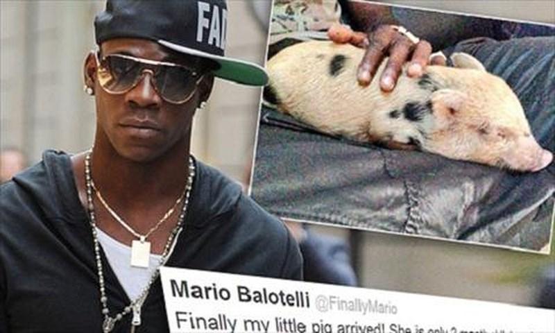 Cầu thủ bóng đá nổi tiếng thế giới Balotelli cũng từng nuôi một con lợn như thú cưng
