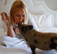 """Những chú lợn cưng """"oách"""" nhất mạng xã hội"""