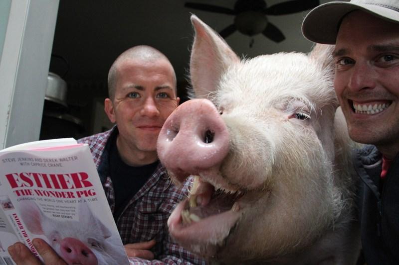 Steve Jenkins và Derek Walter ở Canada đã nhận nuôi con lợn Esther như thú cưng trong nhà
