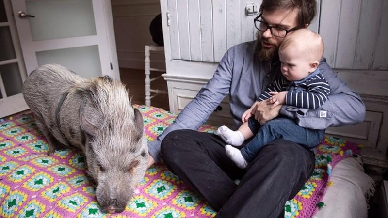 Babe là một con lợn ba tuổi sống cùng gia đình Mario Ramos kể từ khi nó được sinh ra