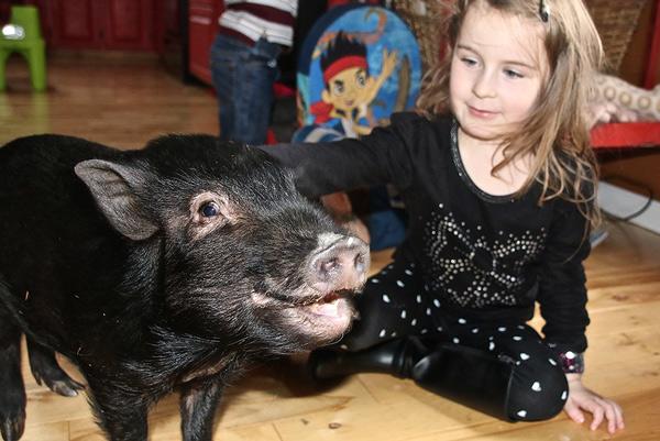 Teagan Sullivan 5 tuổi thích cho con lợn cưng George ăn hằng ngày