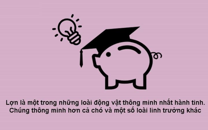 Lợn thông minh hơn chó