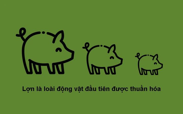 Lợn là loài đầu tiên được thuần hóa