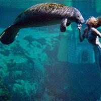 """Điều kinh ngạc về lợn biển """"tiên cá ngoài đời thực"""""""