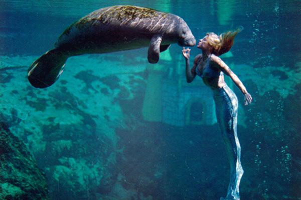 Có một loài động vật được đặt tên theo tên của nàng tiên cá
