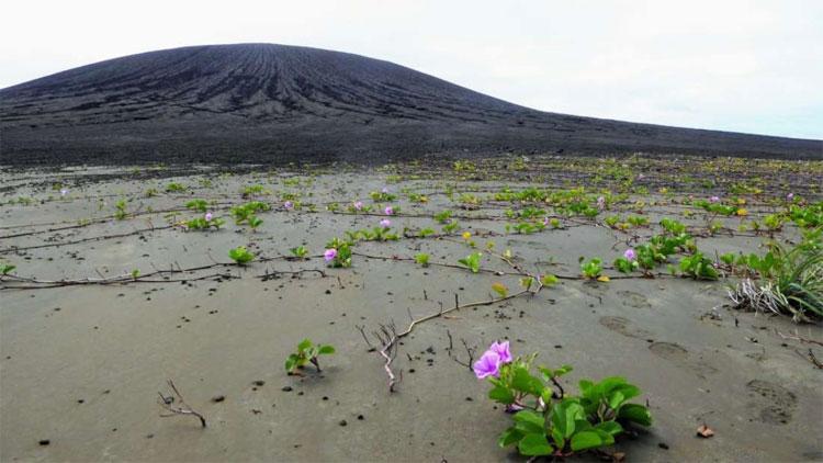 Hòn đảo như bừng cháy với một hệ sinh thái cực kỳ phong phú.