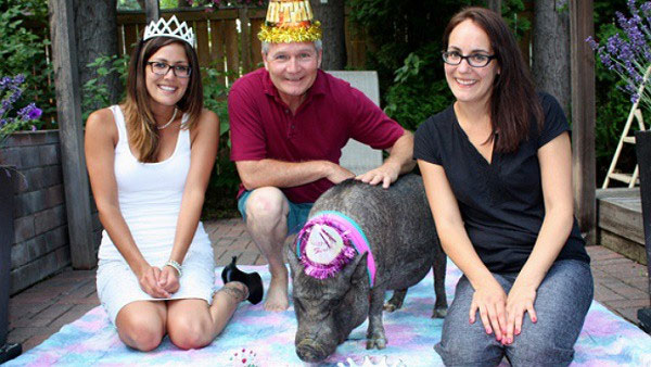 Lợn già nhất thế giới