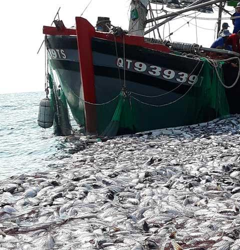 Cá nằm trước mũi tàu.