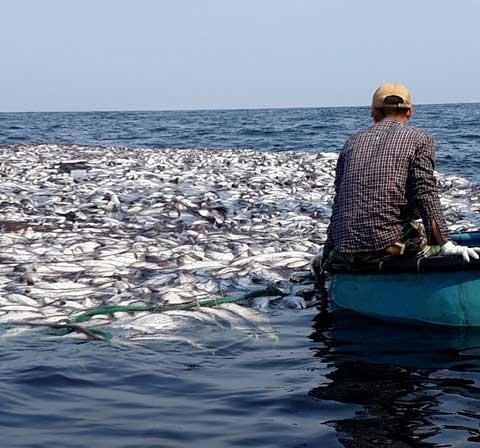 Ngư dân chèo xuồng ra vớt cá.