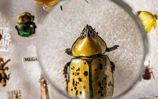 Trong 10 năm nữa chúng ta sẽ chỉ còn 1/4 số lượng côn trùng.