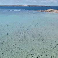 Rợn người cảnh hàng trăm con cá mập vây kín bờ biển