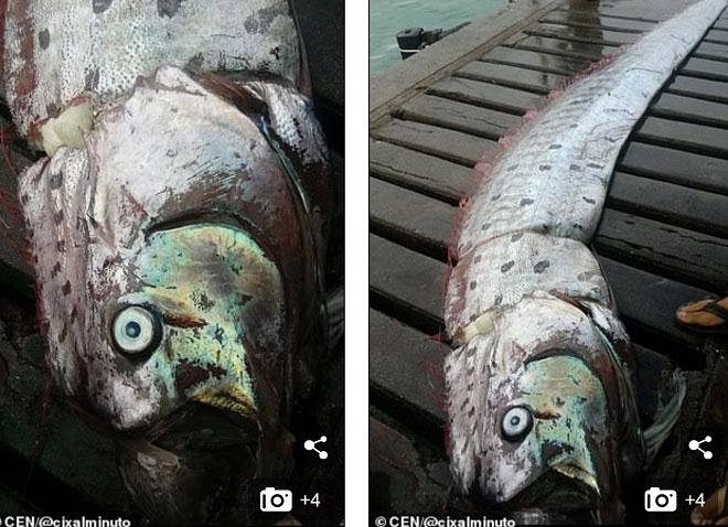 Cá rồng biển mới được phát hiện ở Peru.