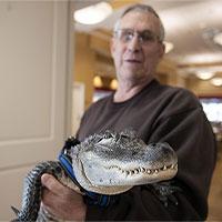 Kỳ lạ cá sấu giúp chữa trầm cảm ở Mỹ