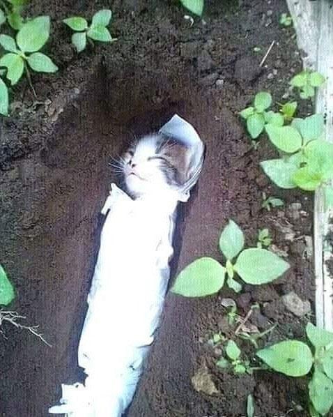 Chú mèo con đáng thương được cho là bị con người giết chết.