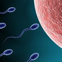 Tại sao cơ thể phụ nữ chỉ nhận một tinh trùng?