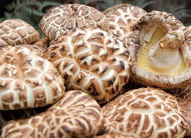 Nấm hương Nhật Bản được cho là dày và thơm hơn và mùa thu và mùa xuân