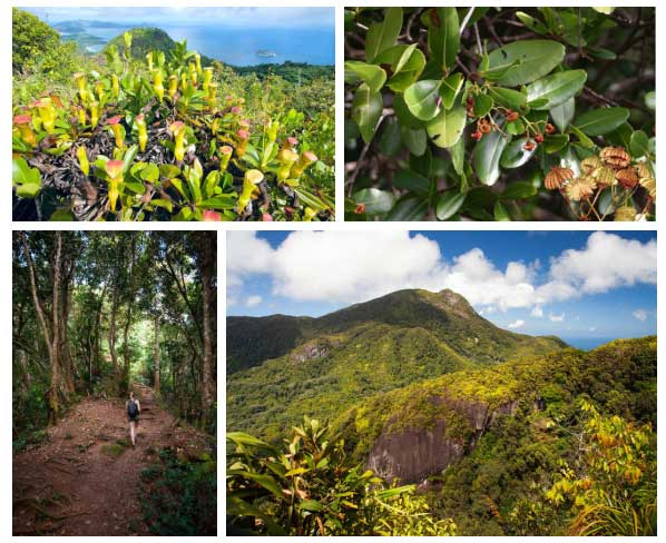 Mặc dù địa hình dốc, hiểm trở, song Morne Seychellois vẫn xanh cây tốt cỏ.
