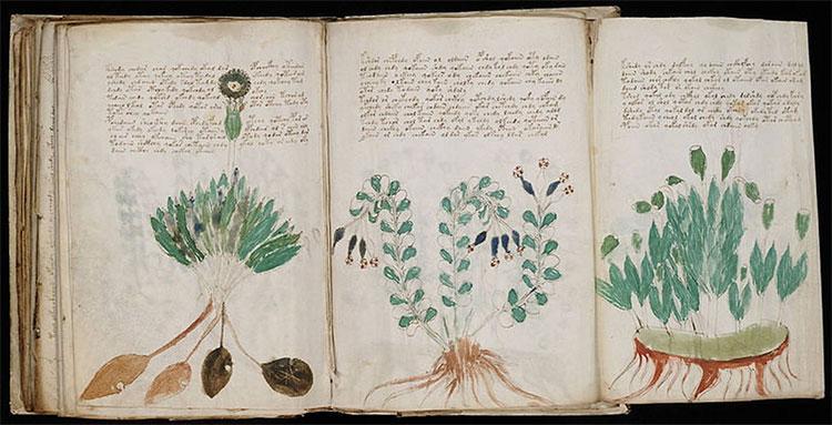Một trang bên trong bản thảo Voynich.