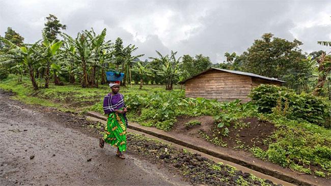 Cộng hòa dân chủ Congo