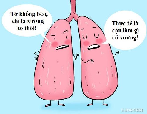 Phổi phải to hơn phổi trái.