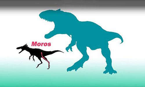 Kích thước loài Moros intrepidus so với hậu duệ T-rex.