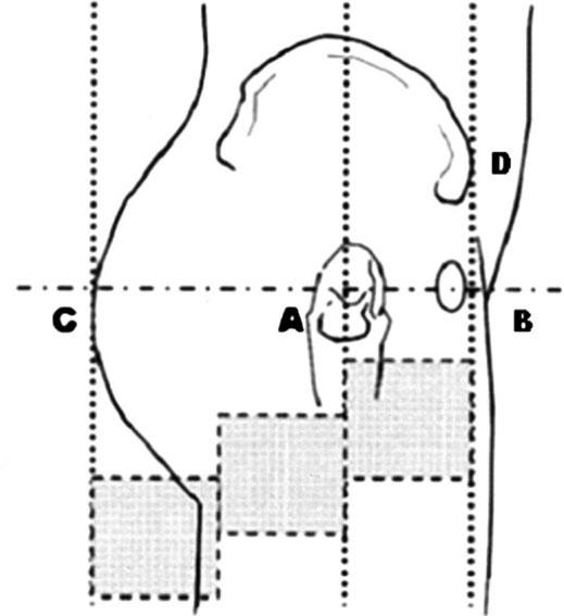 Các điểm mốc được xác định theo vị trí các khớp xương.