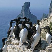 Khoa học loạn nhịp vì 20.000 con chim biển chết một cách kỳ lạ