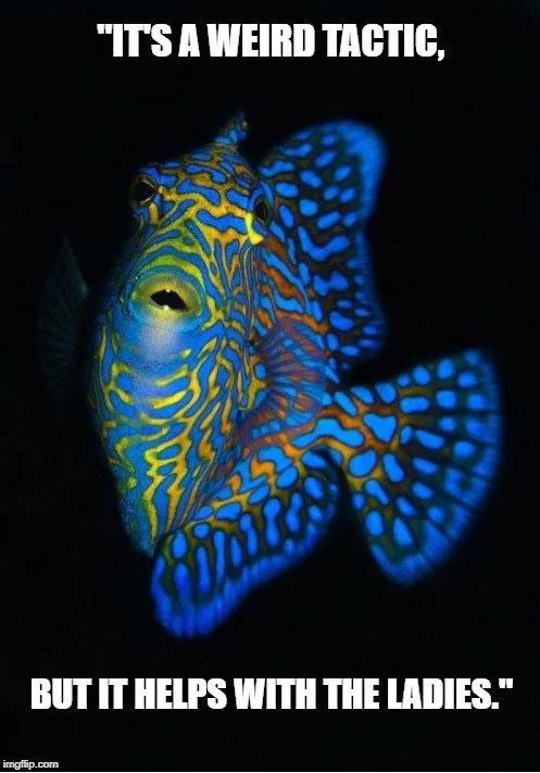 Phát quang sinh học là một trong những hiện tượng thích ứng với tự nhiên đẹp nhất