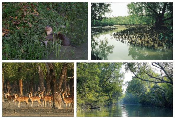 Sundarbans hình thành đủ các loại rừng thấp khác như rừng ngập mặn, rừng duyên hải, rừng hỗn hợp...