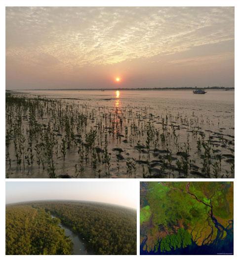 Với mỗi một loại địa hình, Sundarbans lại phát triển một hệ sinh thái riêng.