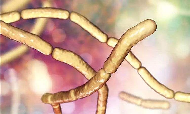 """Một số loài vi khuẩn có thể tạm hóa """"thây ma"""" để tạm thời trốn đòn tấn công của kháng sinh"""