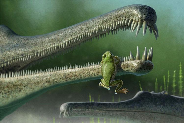 Các nhà khoa học vừa phát hiện hoá thạch loài ếch cổ nhất thế giới.