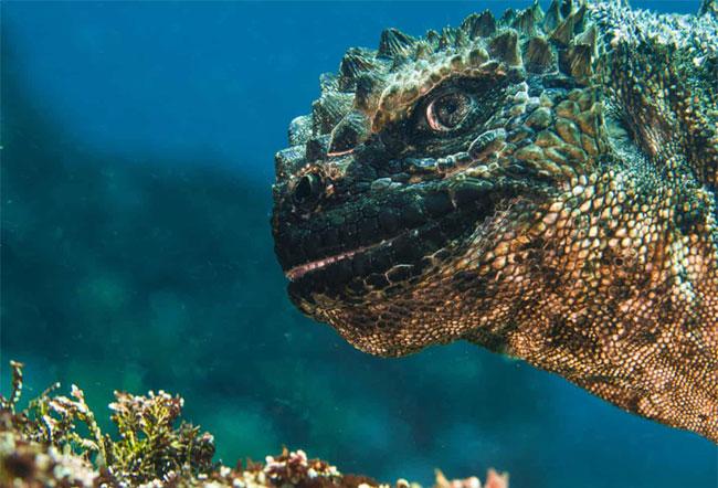 """Tác phẩm """"Quái thú Godzilla"""" của tác giả Bruce Sudweeks (Mỹ) chụp ở Galapagos, Ecuador"""