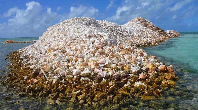 Đảo Conchlà minh chứng cho sự phổ biến của loài ốc xà cừ ở nơi đây.