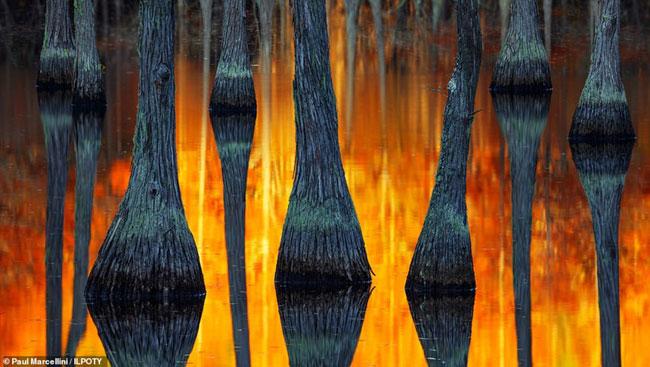 Ảnh chụp lại những thân cây phản chiếu trong hồ nước tạo ảo ảnh quang học