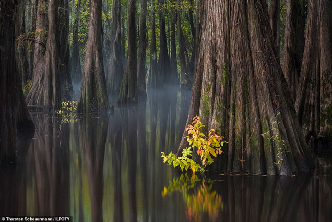 Những thân cây phản chiếu trong một đầm nước tĩnh lặng.