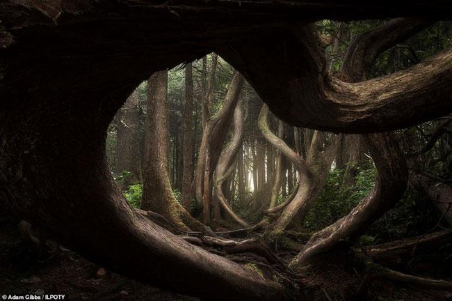 Bức ảnh khu rừng đẹp huyền ảo và ma mị quanh đảo Vancouver.