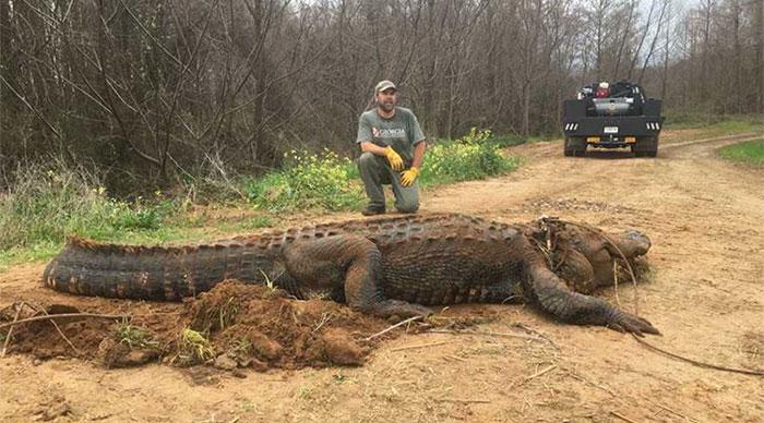 Nhà sinh vật học hoang dã Brent Howze đã giúp giải cứu con vật và sau đó chụp ảnh với nó.