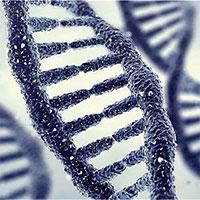 Phát hiện kiểu gene tác động đến hạnh phúc vợ chồng