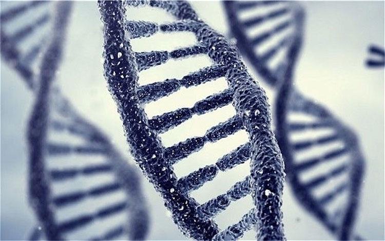 Những cặp vợ chồng hạnh phúc có chung kiểu gene mang tên GG