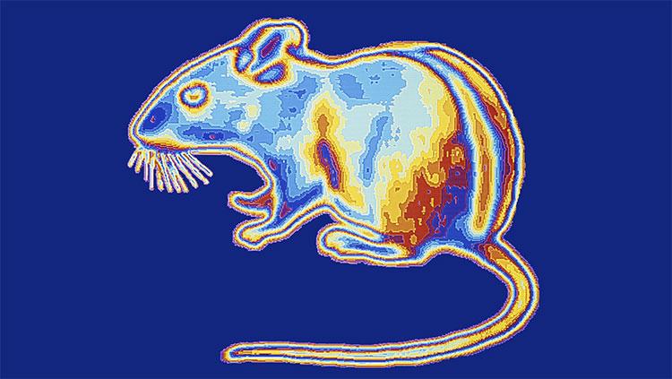 Việc cho chuột một khả năng siêu nhiên là nhìn xuyên bóng tối thực sự khiến nhiều người phải băn khoăn.