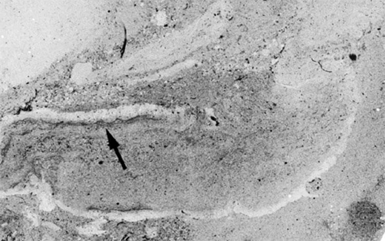Dấu vết về sự tồn tại của những con giun cổ đại mới được các nhà khoa học tìm ra.