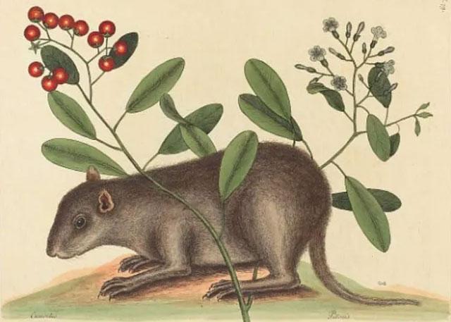 Mô tả của một trong những loài động vật có vú đã biến mất.