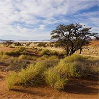 Viễn cảnh thảm khốc của thảo nguyên châu Phi