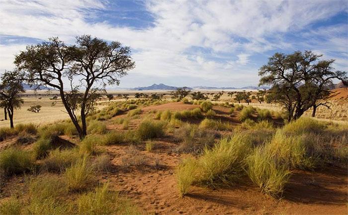 Sự đa dạng thực vật ở thảo nguyên đang bị đe dọa bởi mức tăng CO2.