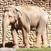 """""""Con voi buồn nhất thế giới"""" qua đời sau 43 năm bị biệt giam"""