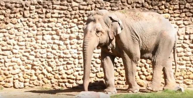 Con voi Flavia tại sở thú thành phố Cordoba, miền nam Tây Ban Nha.