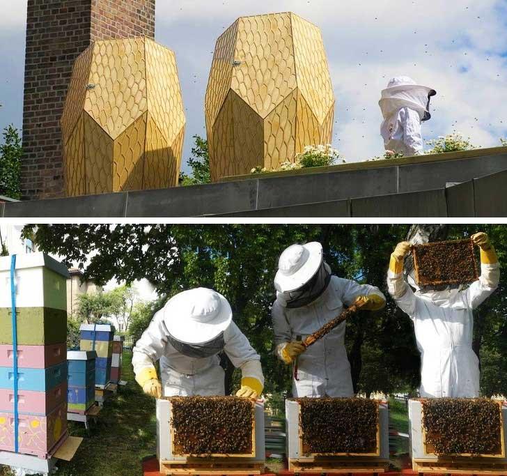 Những con đường dành riêng cho ong